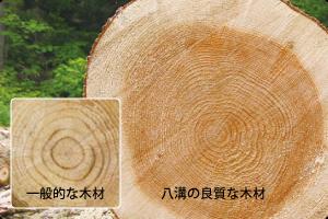 八溝の良質な木材と一般的な木材の比較