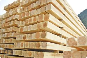 八溝の良質な木材